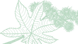 Light green Mary Kay skin care ingredient illustration of a castor oil plant